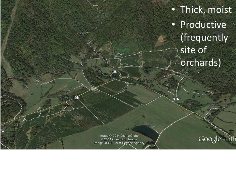 Thick, moist Productive (frequently site of orchards)