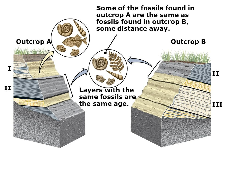Outcrop AOutcrop B I II III Some of the fossils found in outcrop A are the same as fossils found in outcrop B, some distance away. Layers with the sam