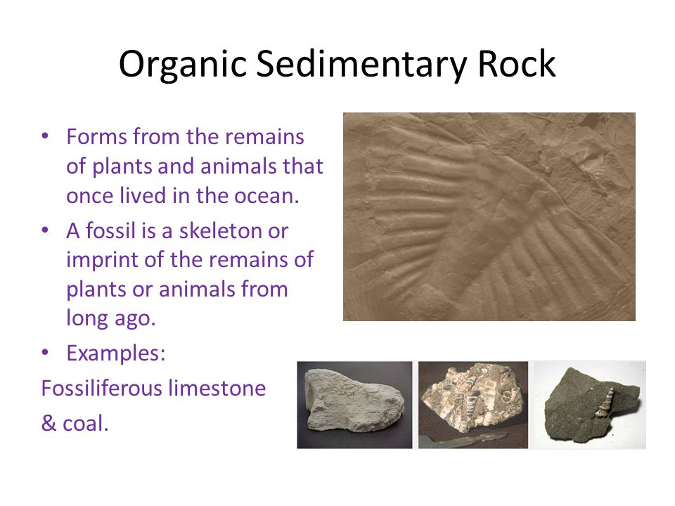 Organic Sedimentary Rock Forms from the remains of plants and animals that once lived in the ocean. A fossil is a skeleton or imprint of the remains o