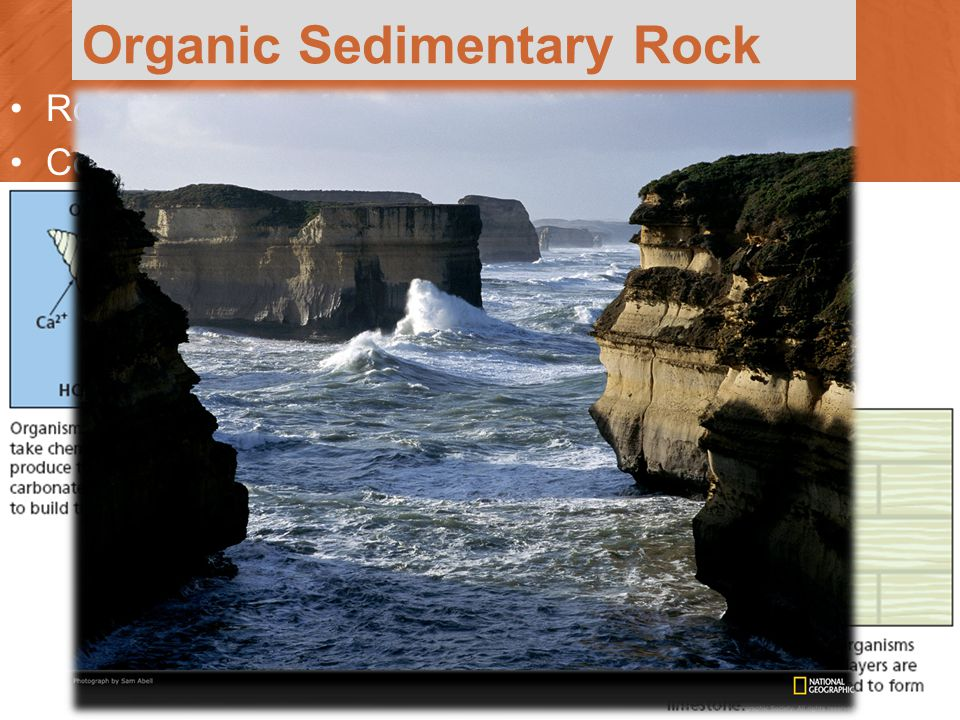 Organic Sedimentary Rock Rock that forms from the remains of living things.