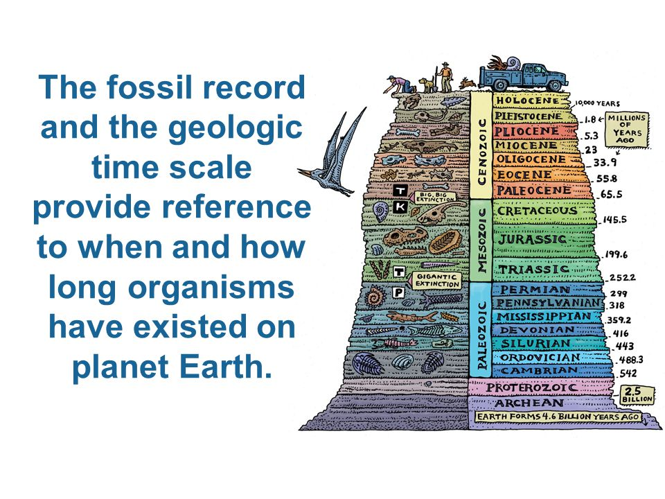 The fossil record and the geologic time scale provide reference to when and how long organisms have existed on planet Earth.