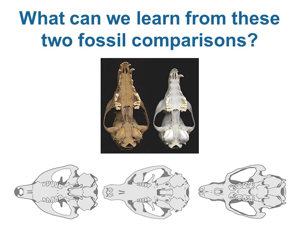 What can we learn from these two fossil comparisons?