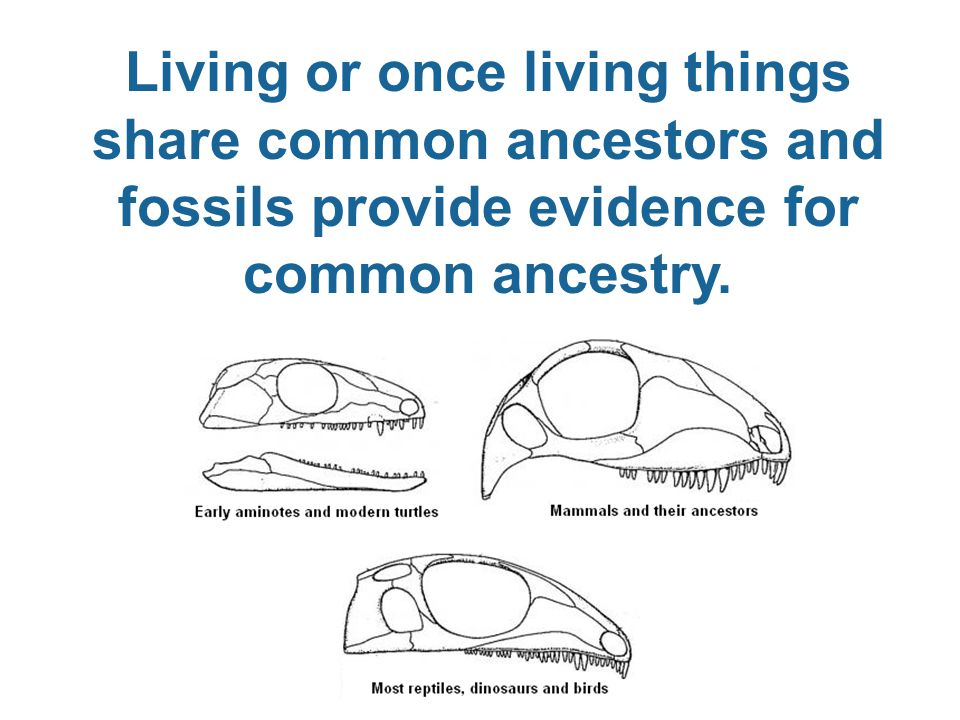Living or once living things share common ancestors and fossils provide evidence for common ancestry.