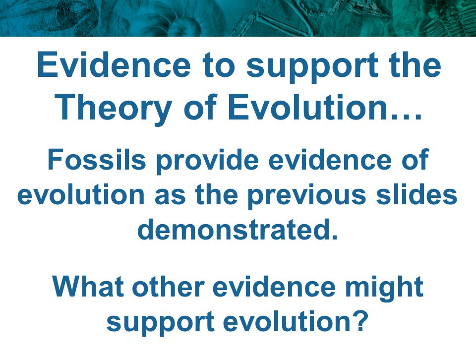 Evidence to support the Theory of Evolution… Fossils provide evidence of evolution as the previous slides demonstrated. What other evidence might supp