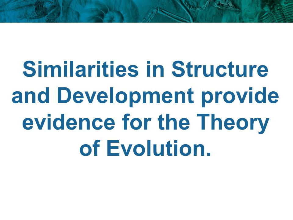 Similarities in Structure and Development provide evidence for the Theory of Evolution.