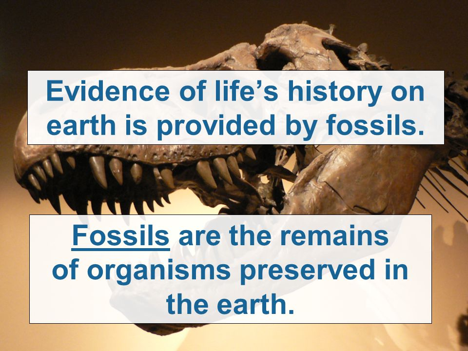 Evidence of life's history on earth is provided by fossils. Fossils are the remains of organisms preserved in the earth.