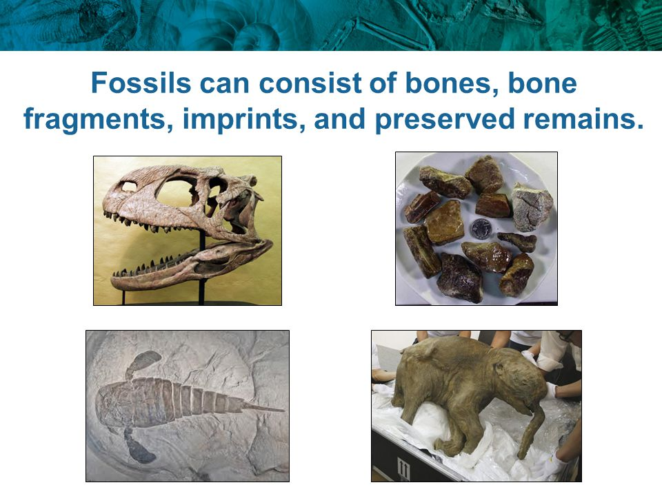 Most fossils are found in sedimentary rock.Why.