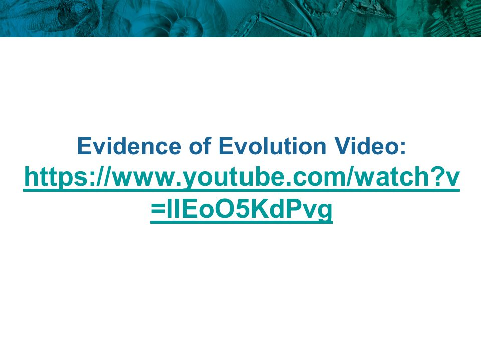 Evidence of Evolution Video: https://www.youtube.com/watch?v =lIEoO5KdPvg