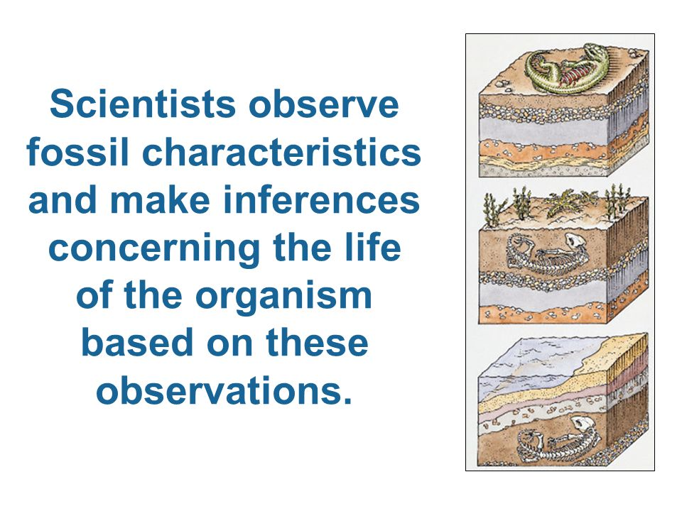 Once scientists piece the fossil below together, what might they be able to know about the once living organism?