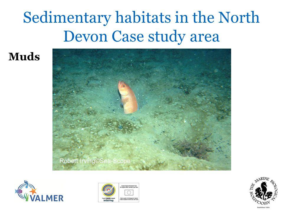 Sands Sedimentary habitats in the North Devon Case study area