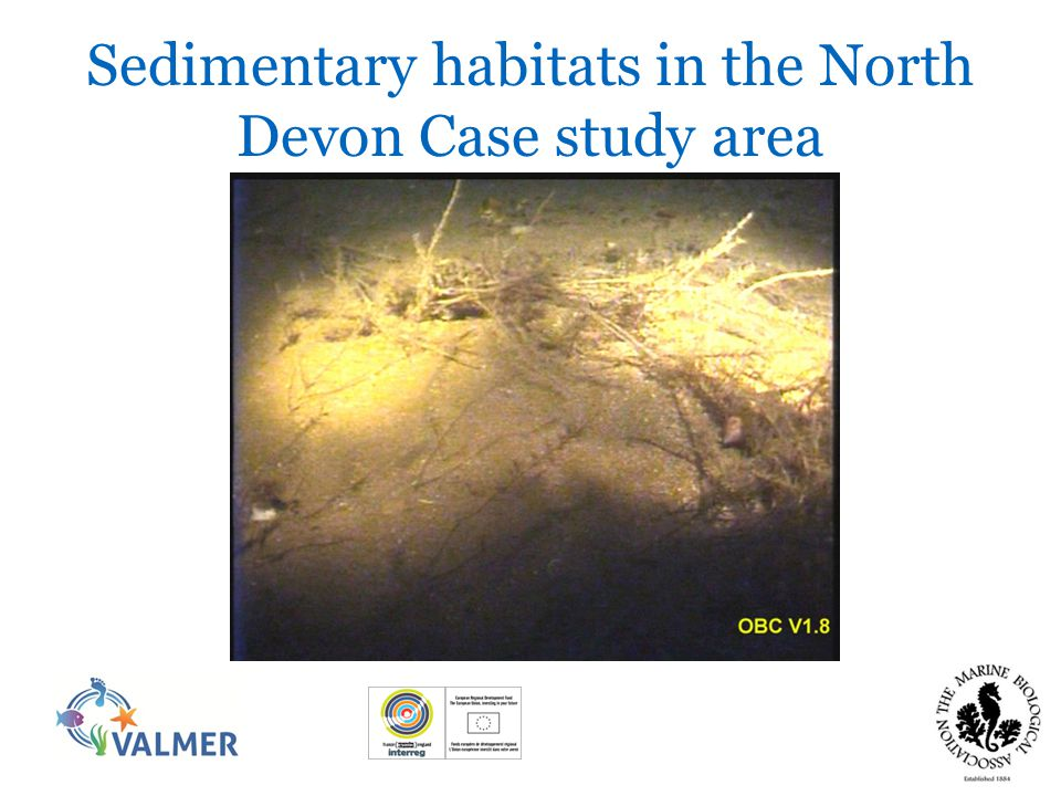 Sedimentary species data Warwick and Davis Outer Bristol Channel RWE EA grab sampling NE Lundy sediment surveys Andy's Grab sampling Lundy Field Society fauna lists Marine Recorder