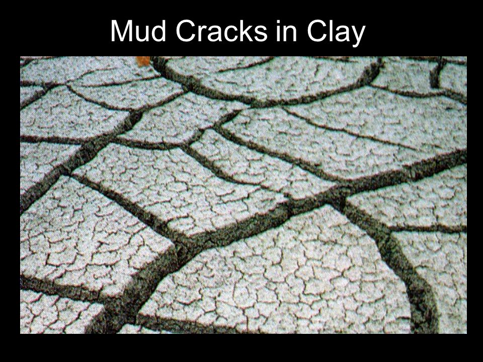 Mud Cracks in Clay