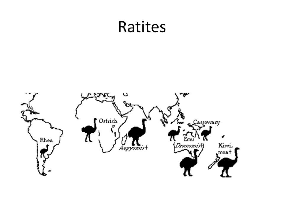 Ratites
