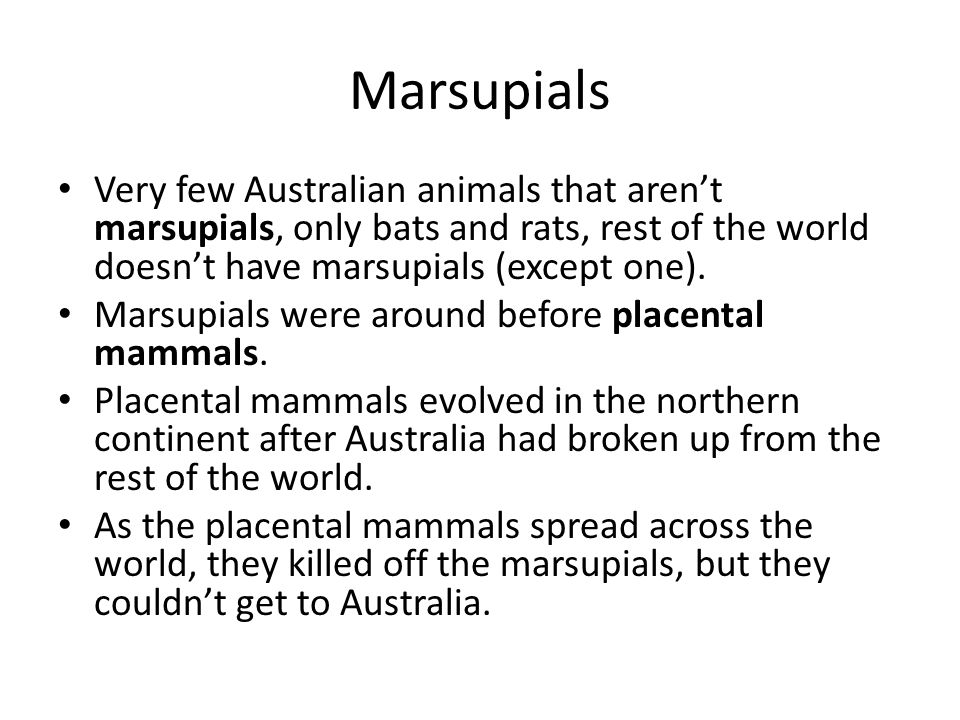Marsupials Very few Australian animals that aren't marsupials, only bats and rats, rest of the world doesn't have marsupials (except one). Marsupials