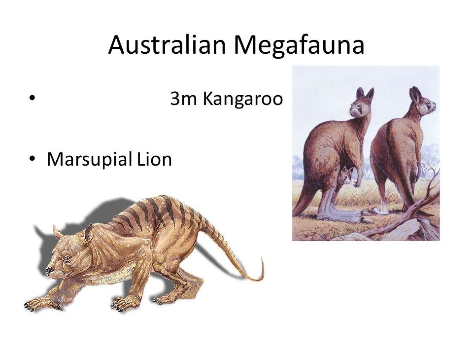 Australian Megafauna 3m Kangaroo Marsupial Lion
