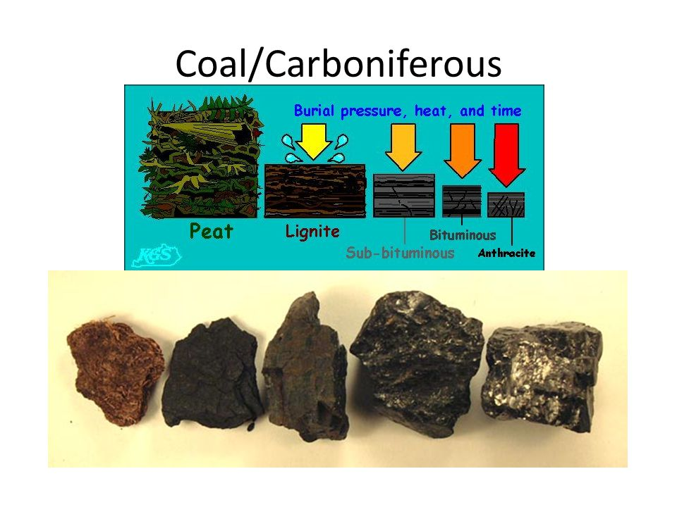 Coal/Carboniferous