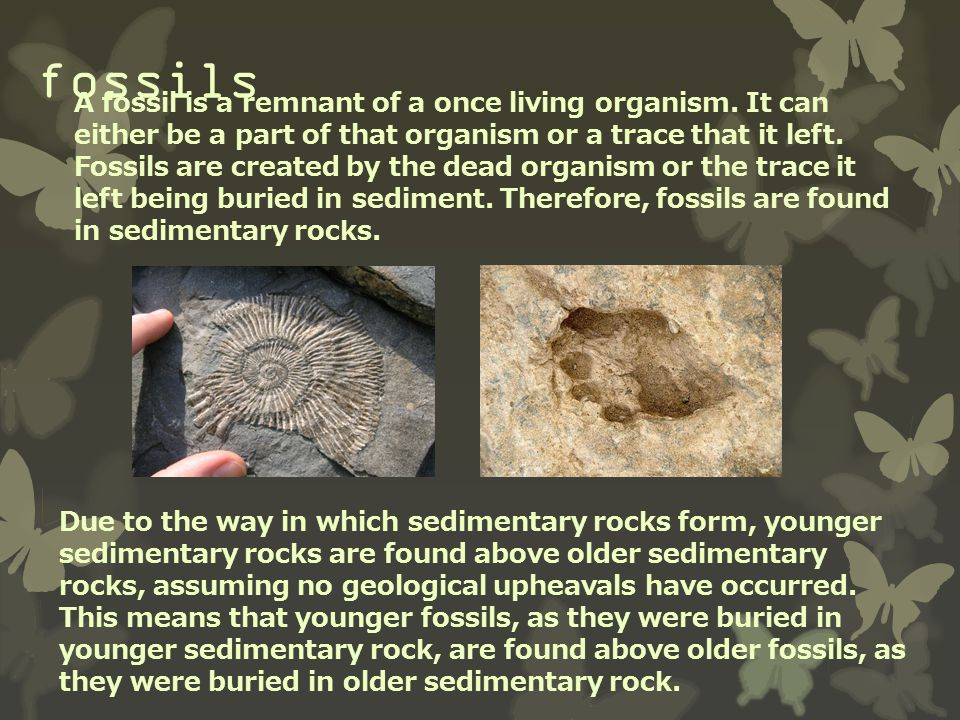fossils A fossil is a remnant of a once living organism. It can either be a part of that organism or a trace that it left. Fossils are created by the
