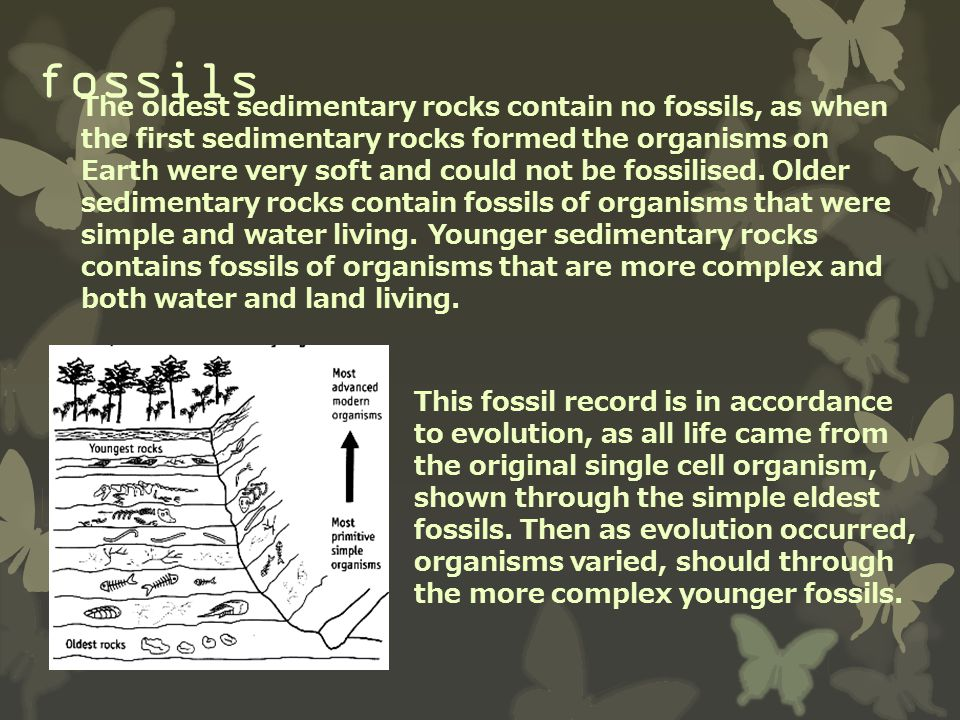 fossils The oldest sedimentary rocks contain no fossils, as when the first sedimentary rocks formed the organisms on Earth were very soft and could no
