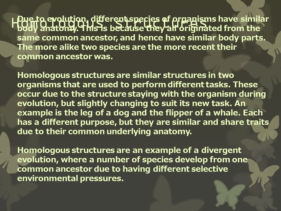 Homologous structures Another example of a homologous structure is the pentadactayl limb which has five digits and is found in many organisms' structures including human arms and dolphin fins.