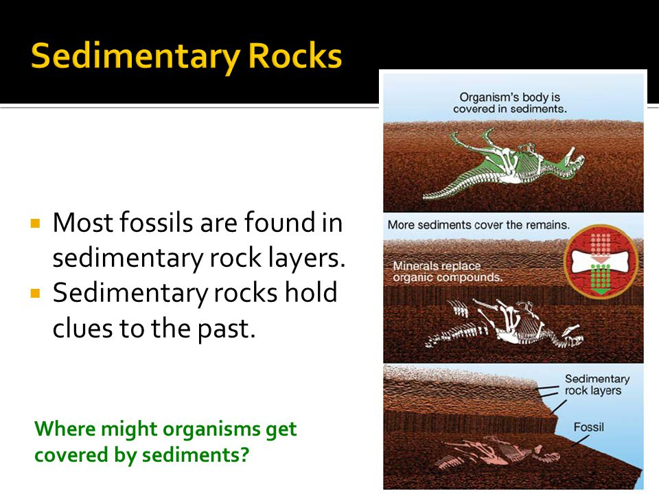  Sedimentary rocks are identified by the size of the particles that form them.