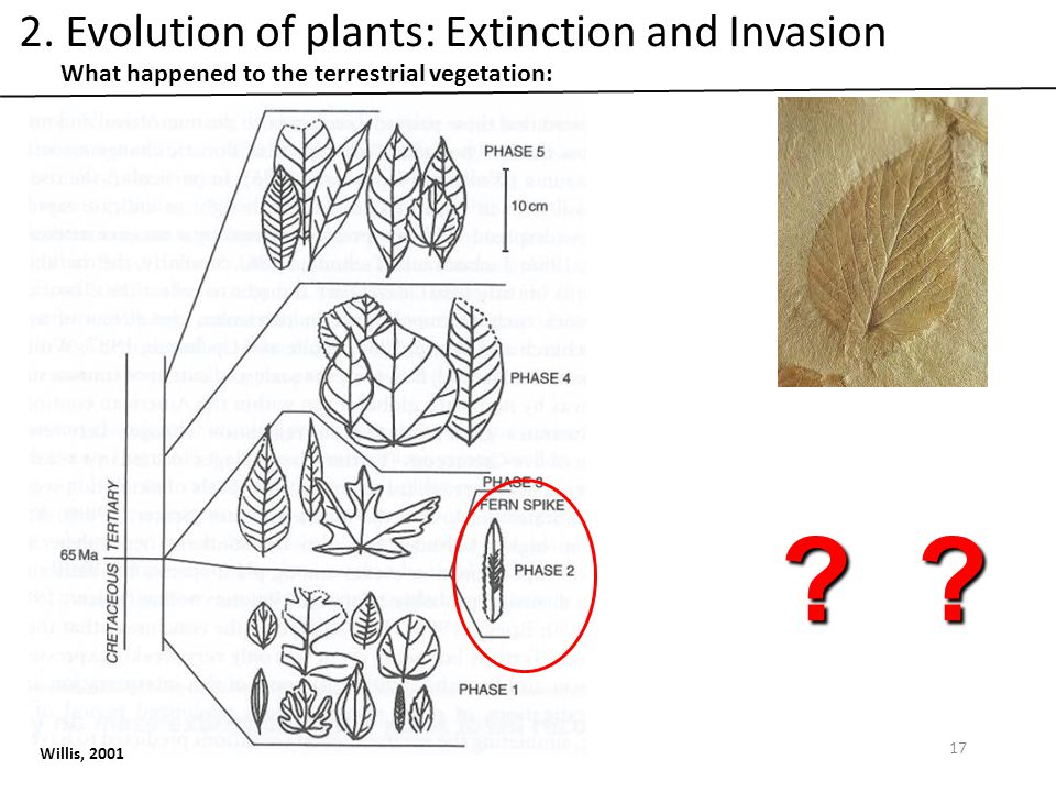 What happened to the terrestrial vegetation: Willis, 2001 .