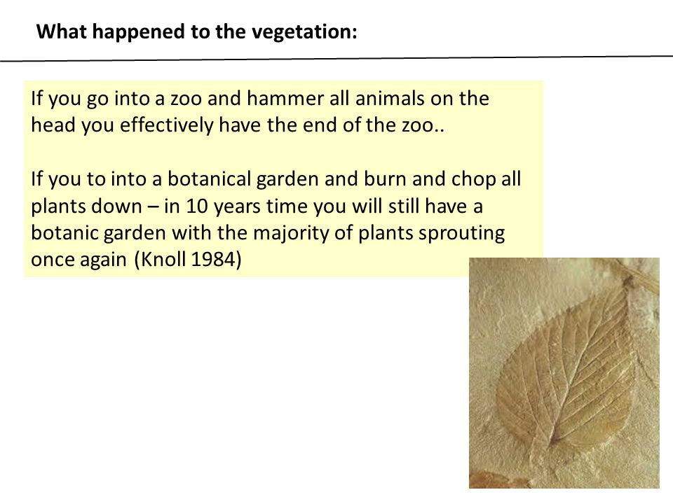 What happened to the vegetation: If you go into a zoo and hammer all animals on the head you effectively have the end of the zoo.. If you to into a bo