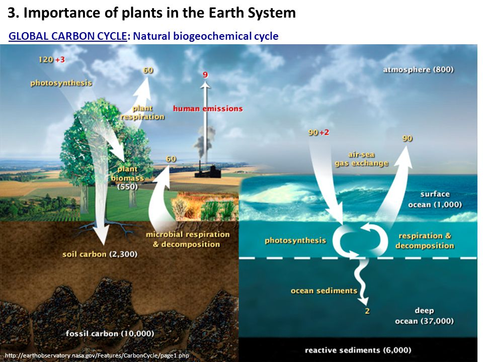 3. Importance of plants in the Earth System GLOBAL CARBON CYCLE: Natural biogeochemical cycle http://earthobservatory.nasa.gov/Features/CarbonCycle/pa