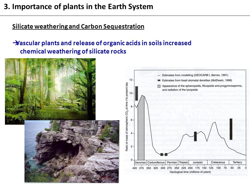 Silicate weathering and Carbon Sequestration  Vascular plants and release of organic acids in soils increased chemical weathering of silicate rocks 3.