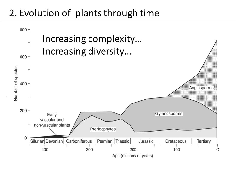 2. Evolution of plants through time Increasing complexity… Increasing diversity…