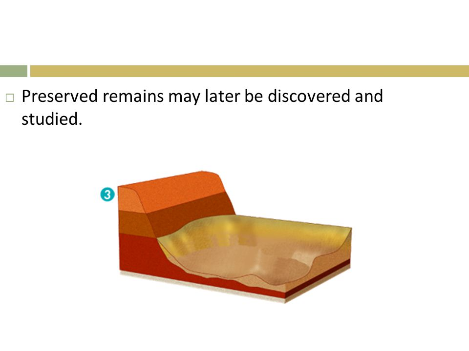  Preserved remains may later be discovered and studied.