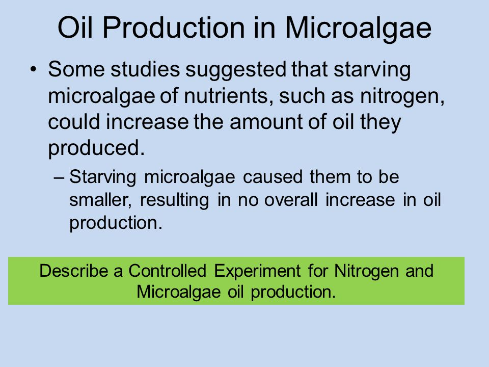 Oil Production in Microalgae Some studies suggested that starving microalgae of nutrients, such as nitrogen, could increase the amount of oil they produced.