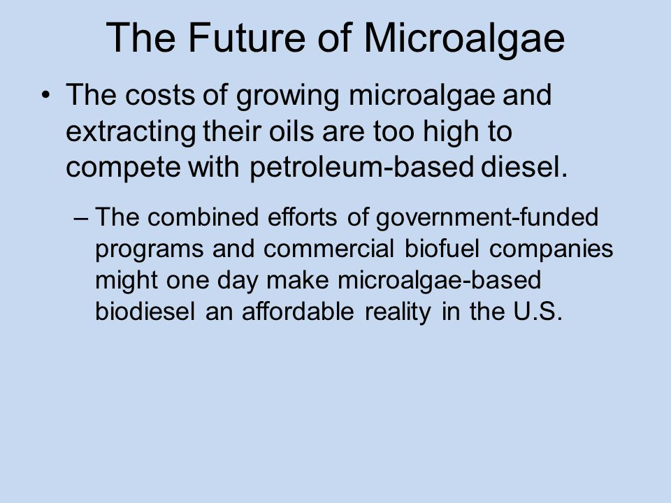 The Future of Microalgae The costs of growing microalgae and extracting their oils are too high to compete with petroleum-based diesel.