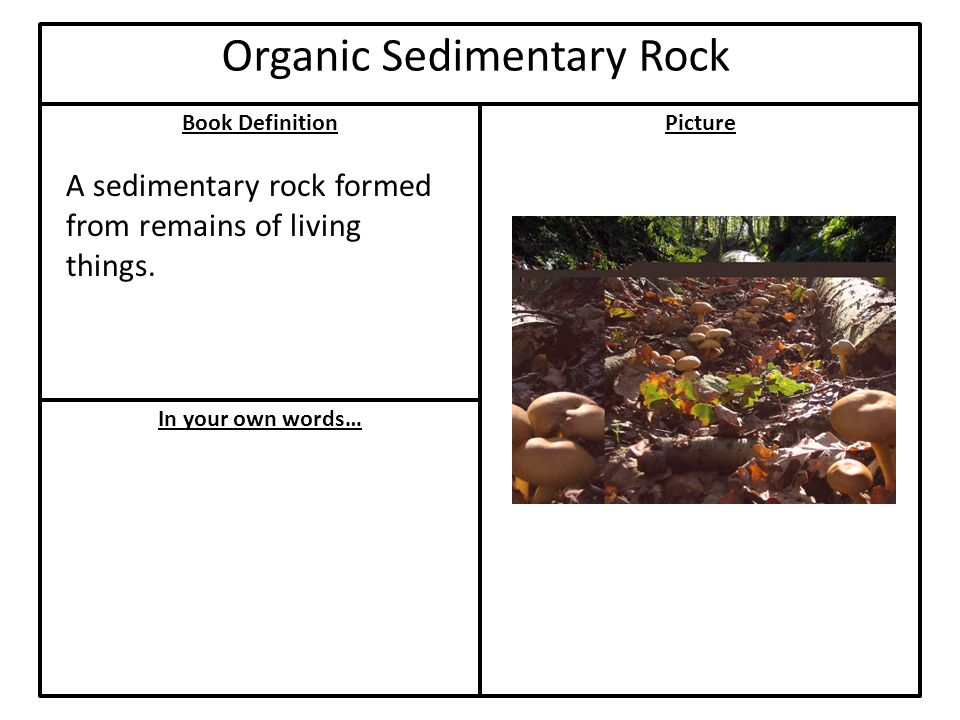 Book Definition In your own words… Picture Organic Sedimentary Rock A sedimentary rock formed from remains of living things.