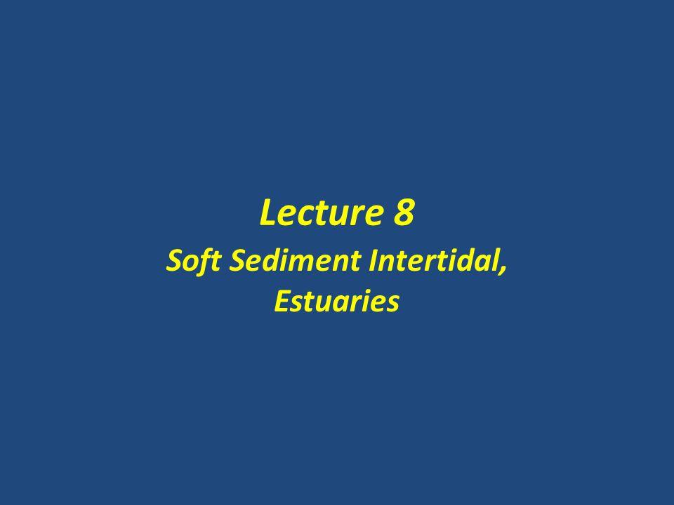 Lecture 8 Soft Sediment Intertidal, Estuaries