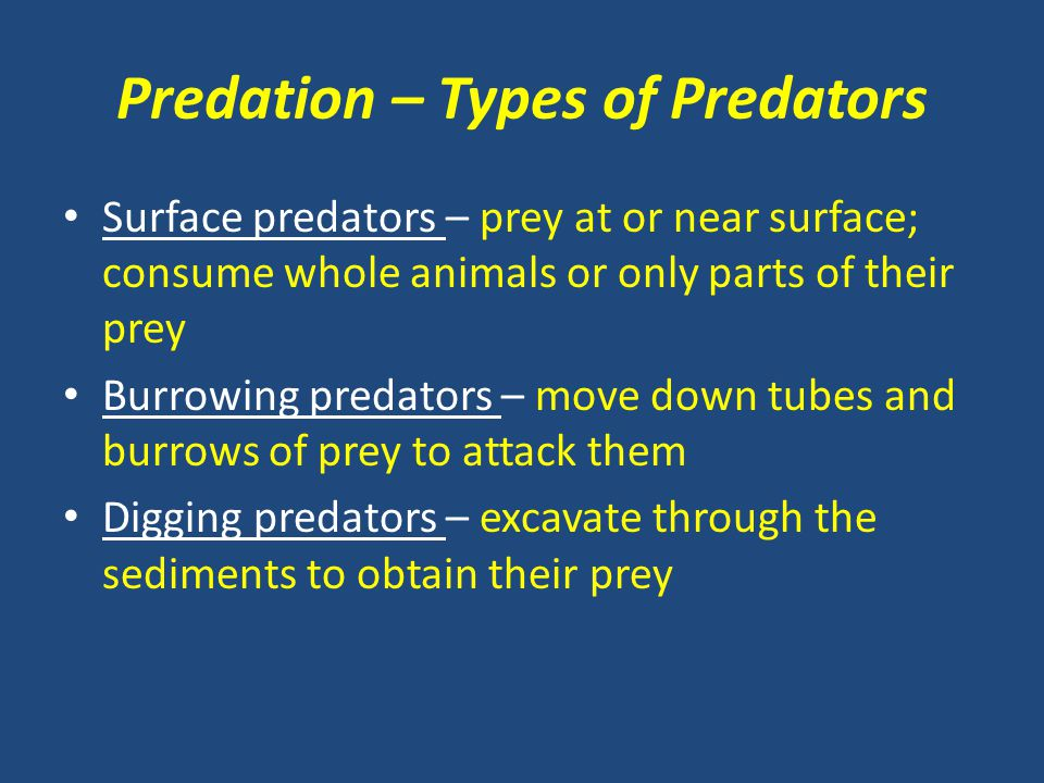 Predation – Types of Predators Surface predators – prey at or near surface; consume whole animals or only parts of their prey Burrowing predators – mo