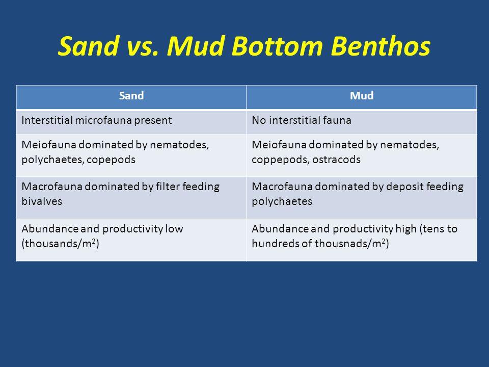 Sand vs. Mud Bottom Benthos SandMud Interstitial microfauna presentNo interstitial fauna Meiofauna dominated by nematodes, polychaetes, copepods Meiof