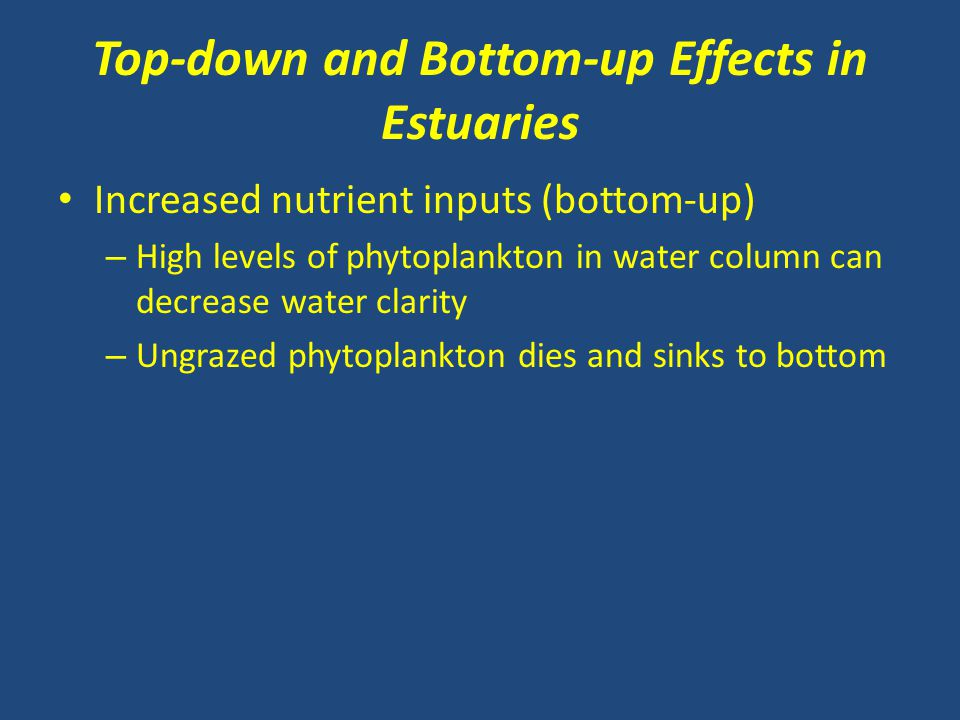 Top-down and Bottom-up Effects in Estuaries Increased nutrient inputs (bottom-up) – High levels of phytoplankton in water column can decrease water cl