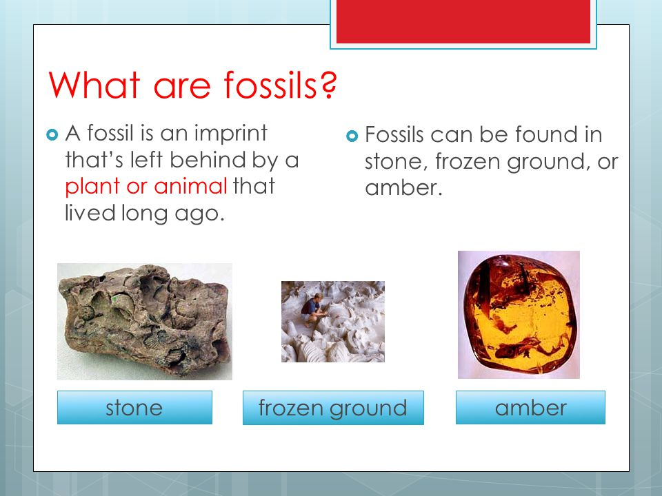 What are fossils.