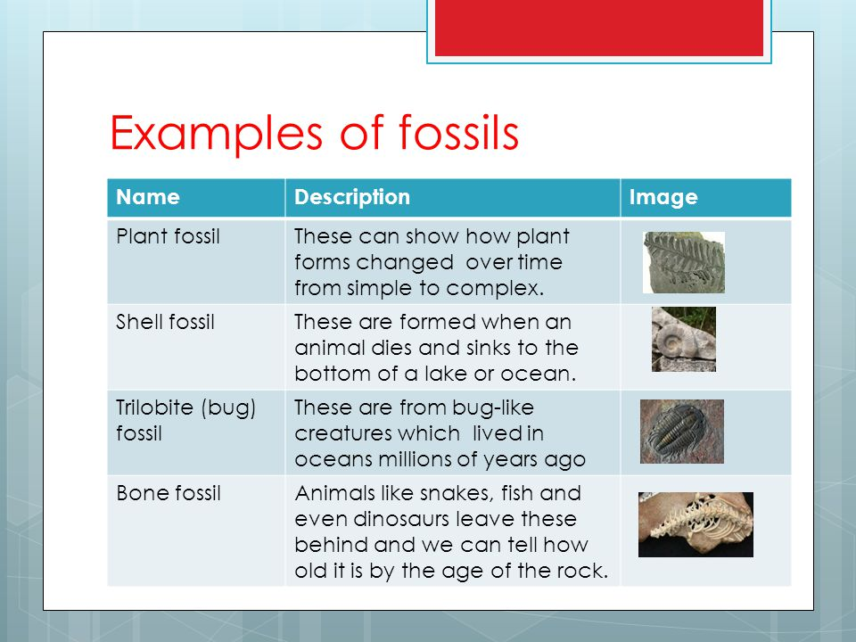 Examples of fossils NameDescriptionImage Plant fossilThese can show how plant forms changed over time from simple to complex.
