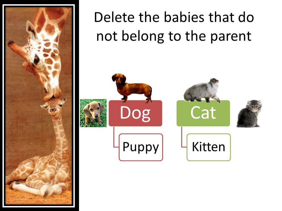 Delete the babies that do not belong to the parent Dog Puppy Cat Kitten
