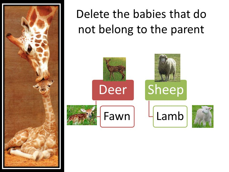 Delete the babies that do not belong to the parent Deer Fawn Sheep Lamb
