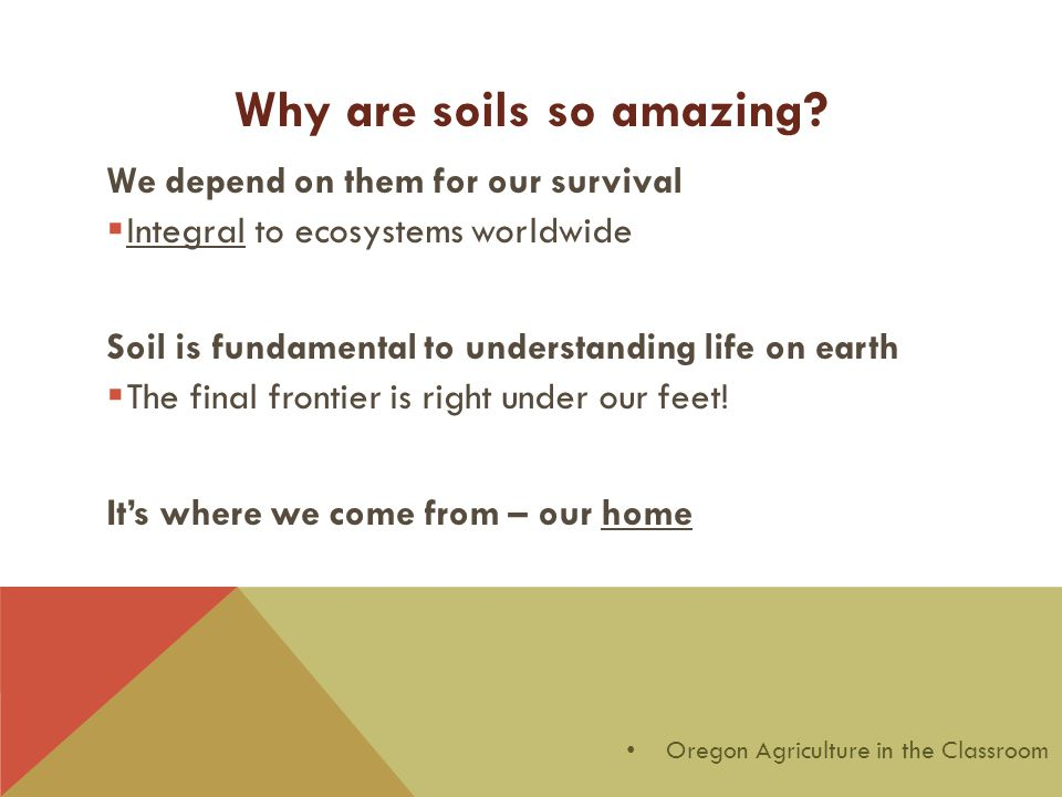 We depend on them for our survival  Integral to ecosystems worldwide Soil is fundamental to understanding life on earth  The final frontier is right