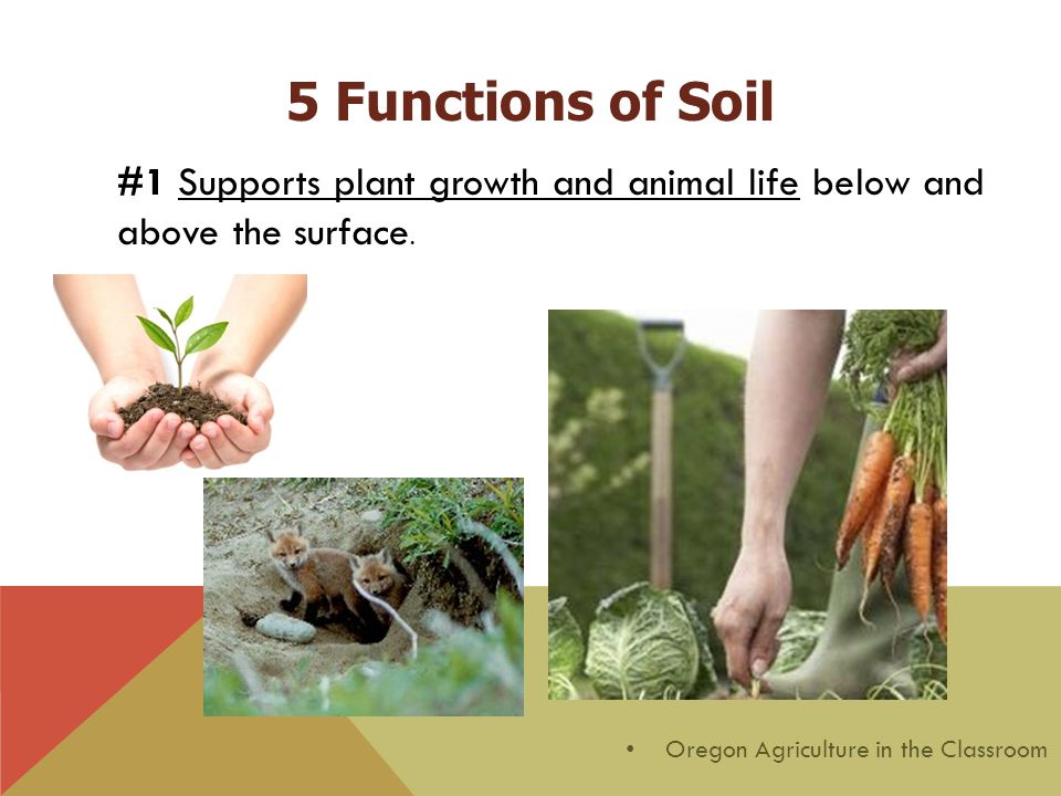 #1 Supports plant growth and animal life below and above the surface. Oregon Agriculture in the Classroom 5 Functions of Soil