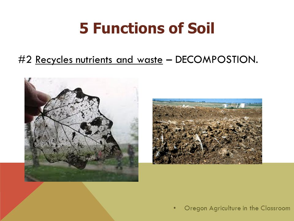 #2 Recycles nutrients and waste – DECOMPOSTION. Oregon Agriculture in the Classroom 5 Functions of Soil