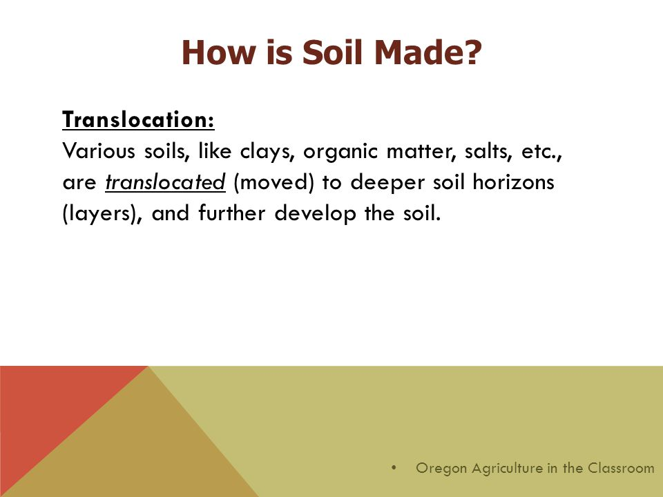 Translocation: Various soils, like clays, organic matter, salts, etc., are translocated (moved) to deeper soil horizons (layers), and further develop the soil.