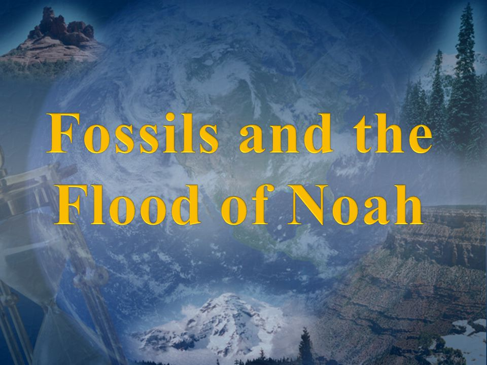 Fossil Record Evidence for Evolution?