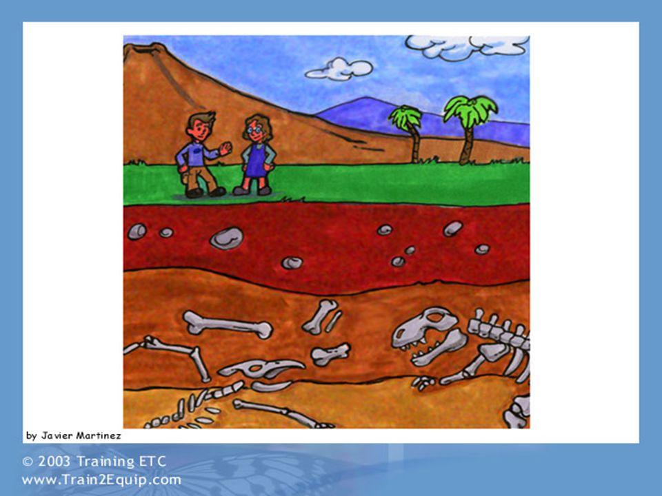 Fossilized Horse Source: Messel Pit Fossil Site http://www.unesco-welterbe.de/en/