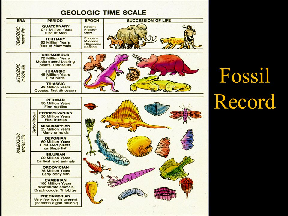 Geological Column Assumptions: 1) Fossil sorting is believed to represent the history of life on earth.