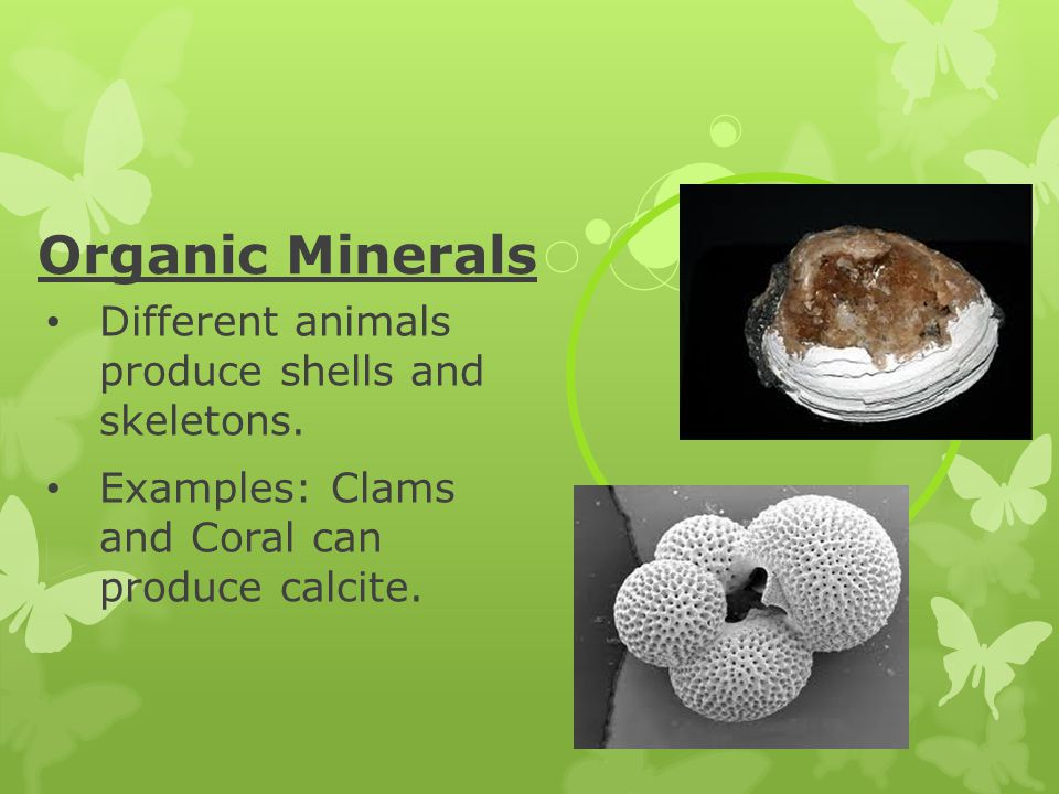 Organic Minerals Different animals produce shells and skeletons. Examples: Clams and Coral can produce calcite.