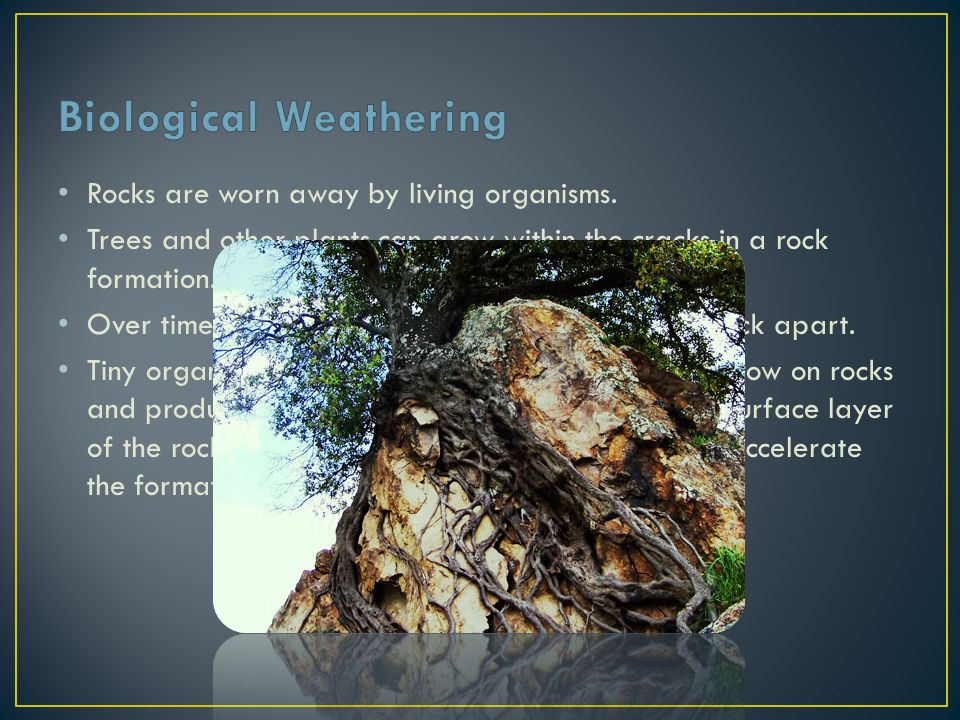 Rocks are worn away by living organisms. Trees and other plants can grow within the cracks in a rock formation. Over time the growing tree eventually